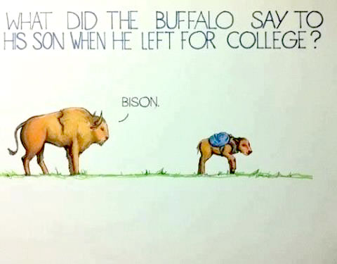 What did the buffalo say to his son on the first day of school? Bison.